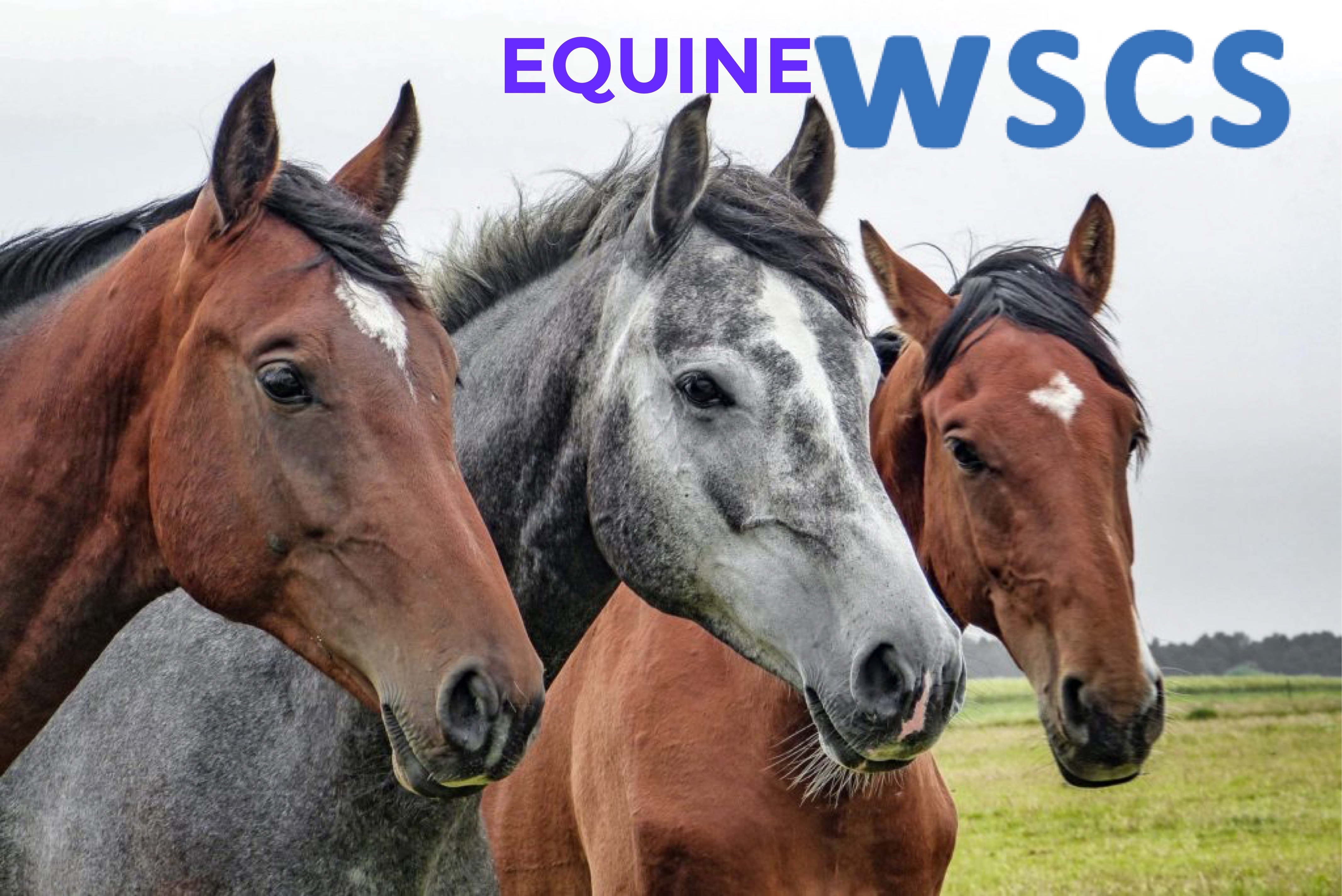 Equine World Stem Cell Summit partners with NAVRMA
